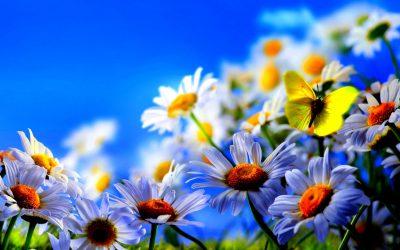 Spring/Summer Hours